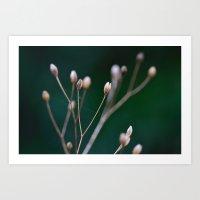 Grass Seeds Art Print