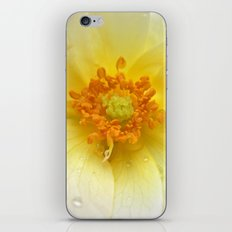 beauty rose iPhone & iPod Skin