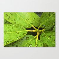 Green Leaves with Water Droplets No 139 Canvas Print