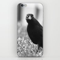 Black Bird iPhone & iPod Skin