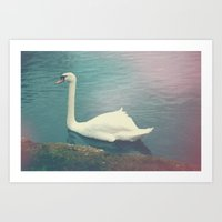 Oxford Swan Art Print