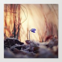 When evening comes Canvas Print