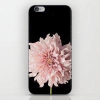 Pink Daliah iPhone & iPod Skin