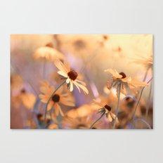 Suns star in the autumn garden Canvas Print