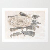 Vintage Camellia Art Print