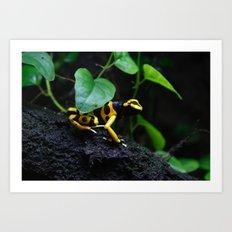 Poison Dart Frog D. Leucomelas Art Print