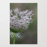 Wildling - No. 1 Canvas Print