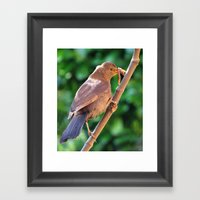 The Early Bird Framed Art Print