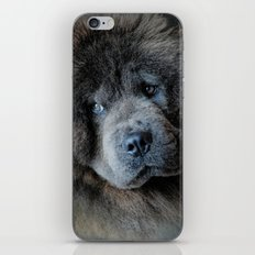 Watching Master - Blue Chow Chow iPhone & iPod Skin
