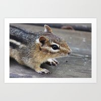 Chipmunk Art Print