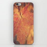 Autumn Bright iPhone & iPod Skin