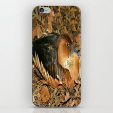 Fulvous Whistling Duck iPhone & iPod Skin