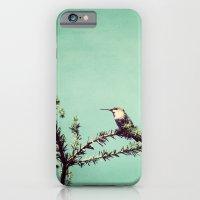 Hummingbird at rest iPhone 6 Slim Case