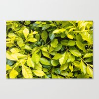 Too Much Green Leaves Canvas Print