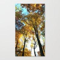 Glowing Treetop Canvas Print