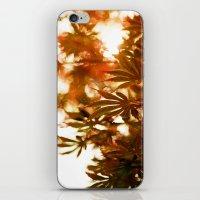 Wind In The Maple iPhone & iPod Skin
