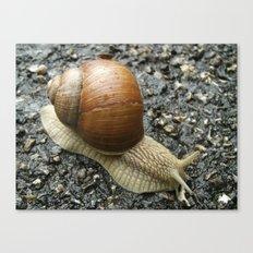 Snail Photography Canvas Print