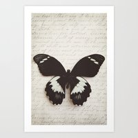 Papilio Aegus Butterfly Art Print
