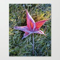 Fallen autumn red leaf in the grass during morning frost Canvas Print