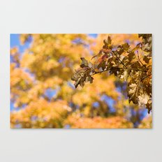 Orange Backdrop Canvas Print