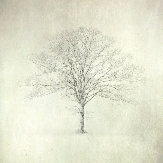 Winter Tree, Norfolk Art Print