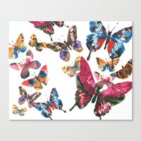 Pretty Butterflies, insect art, butterfly illustration Canvas Print