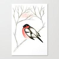 Eurasian Bullfinch (Снегирь) Canvas Print