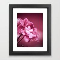 Ivy Geranium Named Conte… Framed Art Print