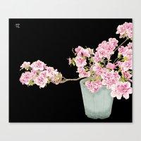 Heavenly Blossom on Black Canvas Print