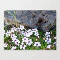 Volcanic Flowers Canvas Print