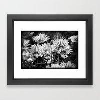 Desert Daisies (bnw) - Daisy Project in memory of Mackenzie Framed Art Print