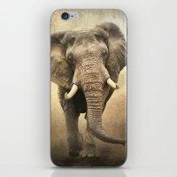 African Beauty iPhone & iPod Skin