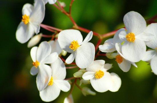 January White Blossoms Art Print