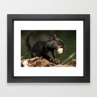Black Chipmunk Framed Art Print