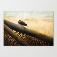 Mourning Dove on Beach Canvas Print