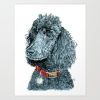 Whitney The Poodle Art Print