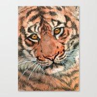 Tiger portrait 884 Canvas Print