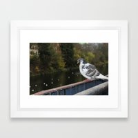 Pigeon by Canal Framed Art Print