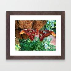 Butterfly 1 Framed Art Print