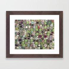 succulent party  Framed Art Print