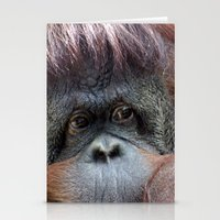 Pongo Stationery Cards