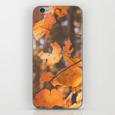 red autumn leaves iPhone & iPod Skin