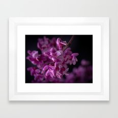 Red Bud Blossoms  Framed Art Print