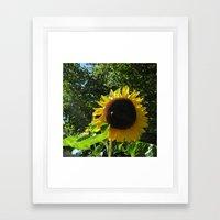 Sunflower N Bee Framed Art Print