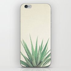 Haworthia iPhone & iPod Skin
