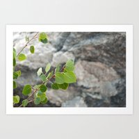 Aspen Leaves Art Print