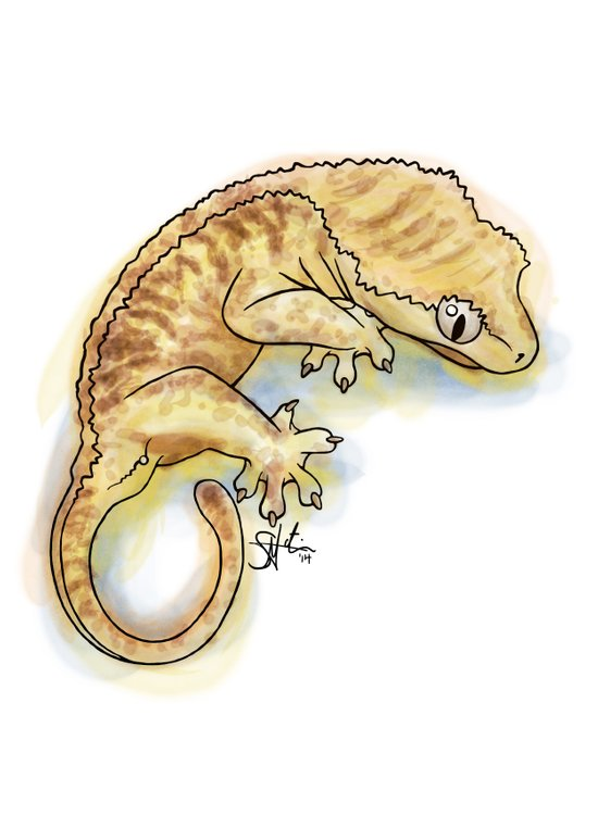 Crested Gecko Art Print