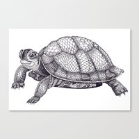 Turtle Pattern Canvas Print