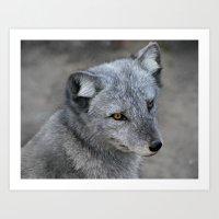 Polar Fox Art Print