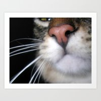 Kitty Nose Art Print